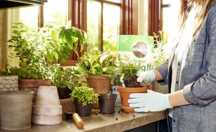 How To Make Potting Soil For Herbs
