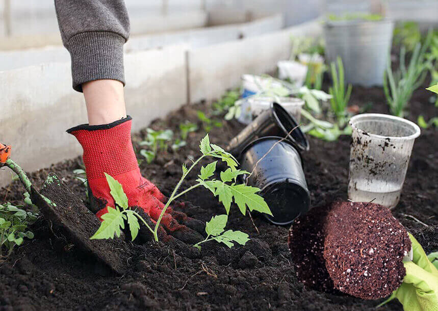 How to Mix the Ingredients to Make the Organic Potting Mixture